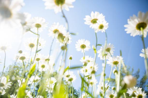 lindas flores de primavera