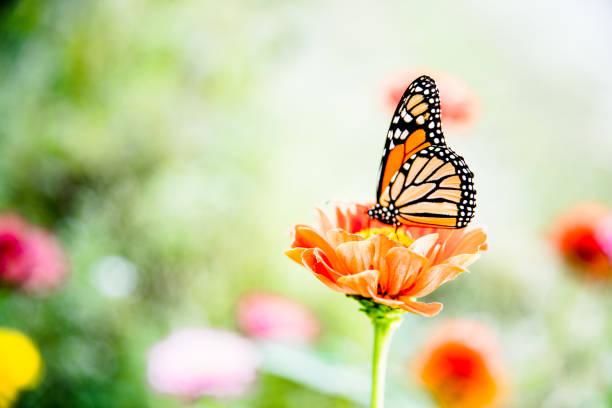 Hermosa Mariposas anunciando la primavera
